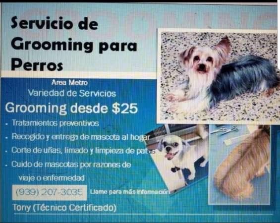 Servicio grooming perros